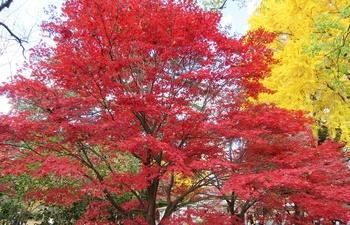新宿御苑の紅葉.jpg